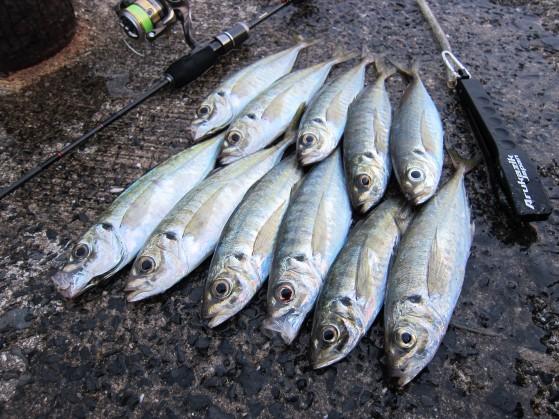 【FISHING SHOW OSAKA 2016】のご案内